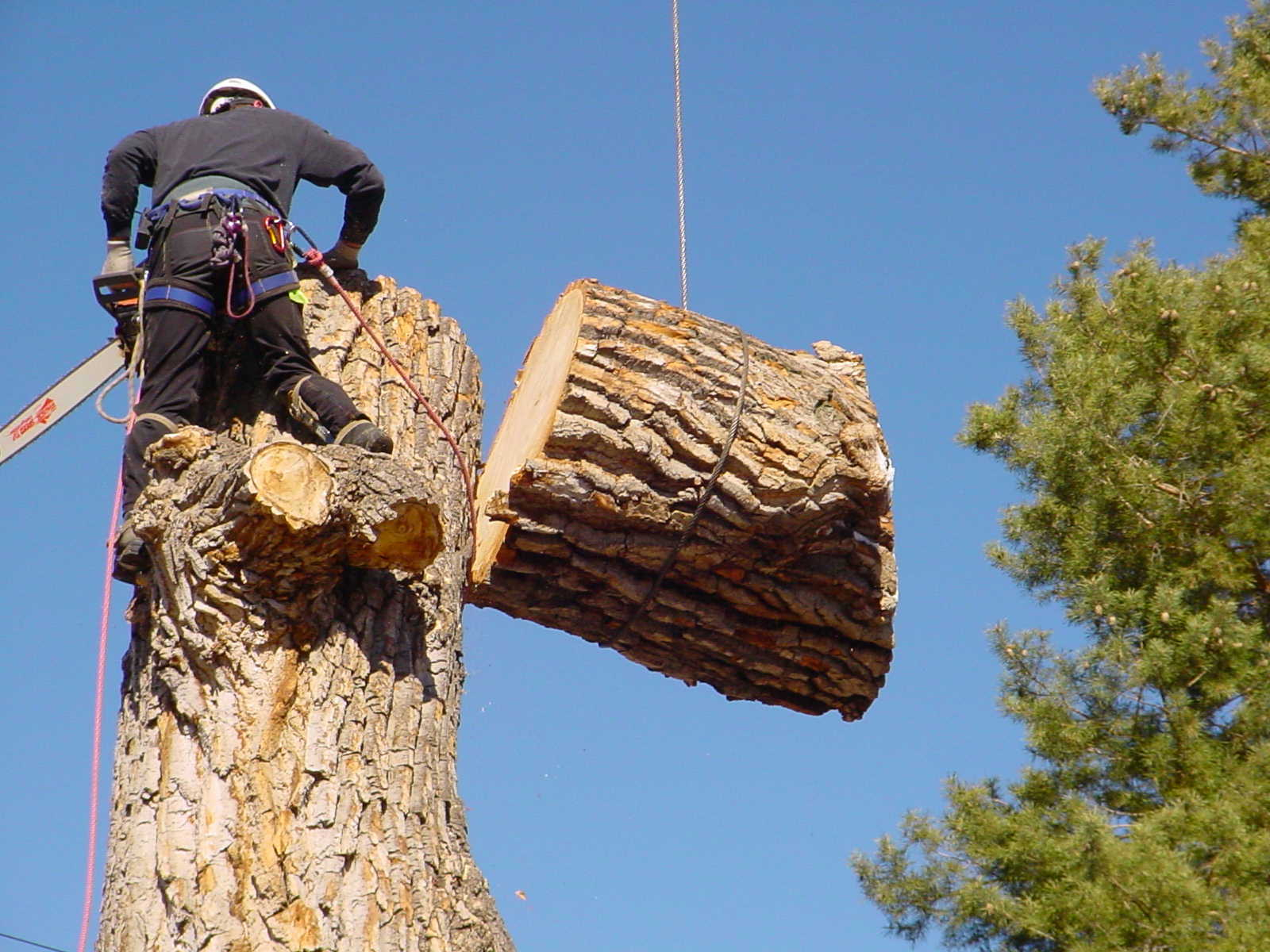 Dead Wooding