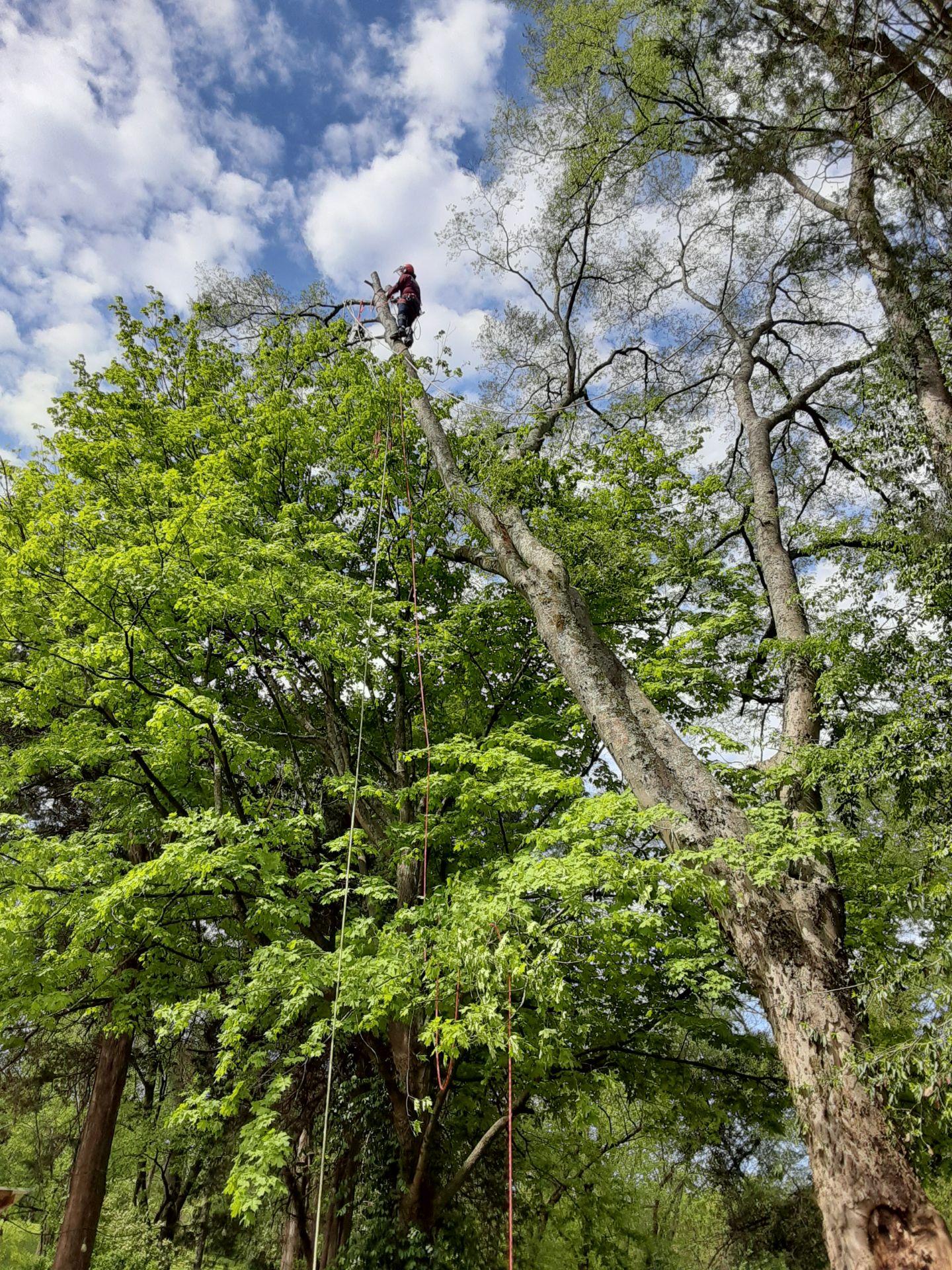 Tree Pruning 5