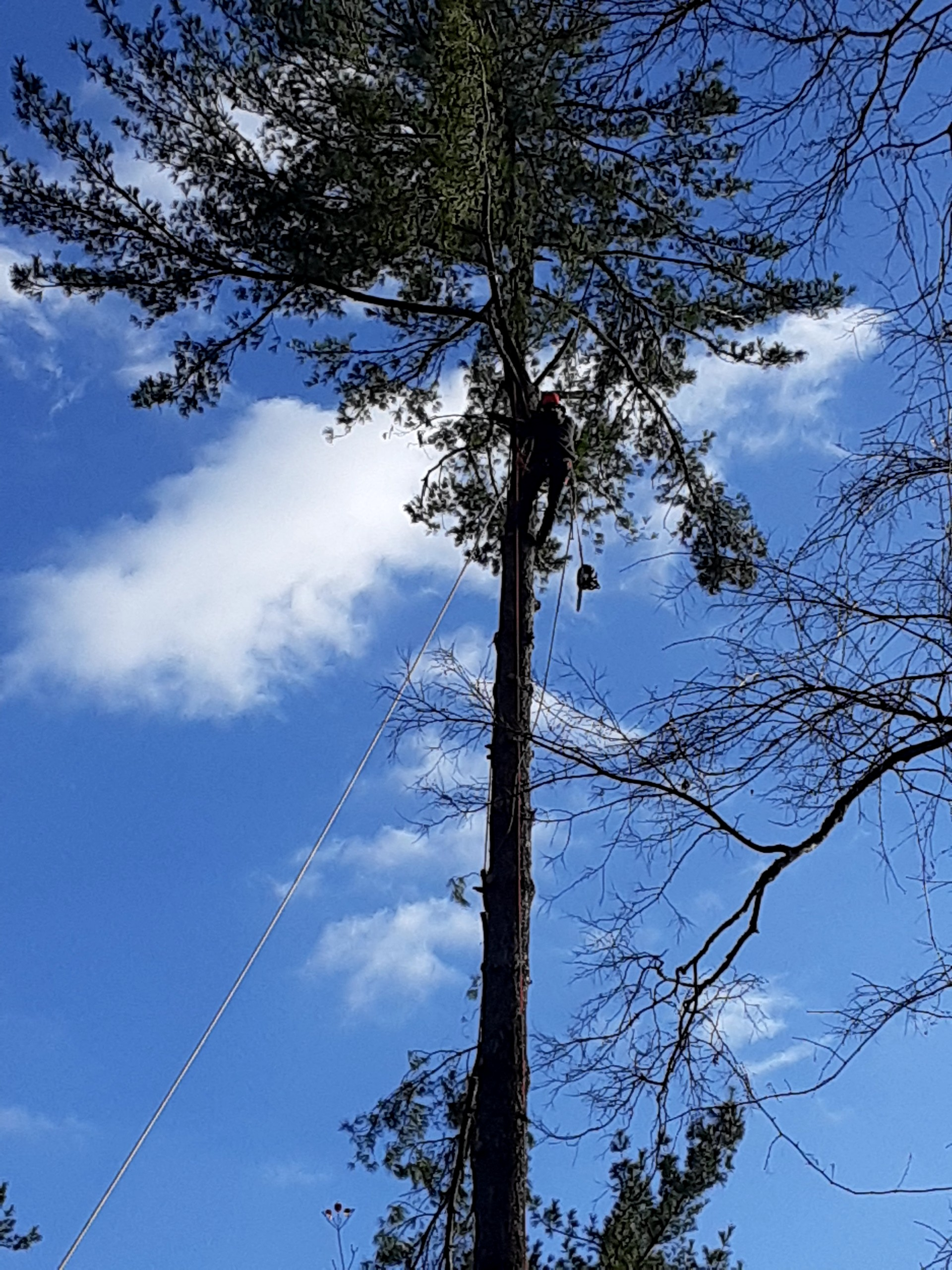 Tree Removal 5